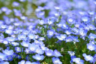近くの花のアップの写真・画像素材[1156629]