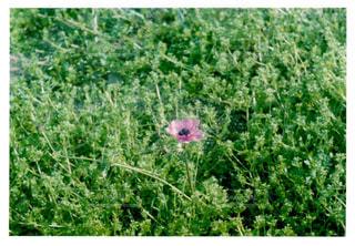 森の中の緑の植物の写真・画像素材[1157632]