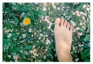 花を持っている手の写真・画像素材[1157635]