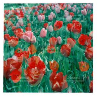 色とりどりの花のグループの写真・画像素材[1157643]