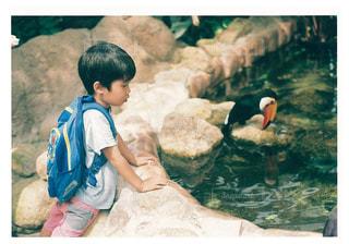 動物園で座っている若い男の子 - No.1181607