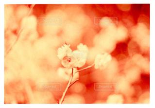 近くの花のアップの写真・画像素材[1199661]