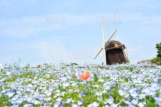 近くの花のアップ - No.1228267