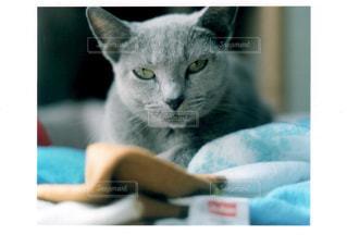 近くに猫のアップの写真・画像素材[1230761]