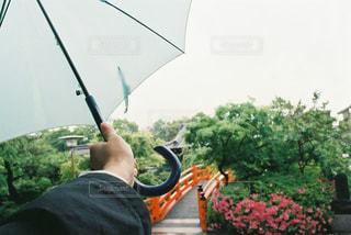 女性,空,花,橋,アクセサリー,雨,傘,庭,屋外,京都,手,女,樹木,人物,人,植木,梅雨,寺,朱色,境内,つつじ