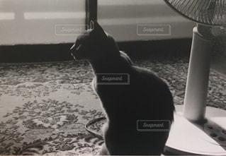 窓の前に座っている猫の写真・画像素材[1255810]