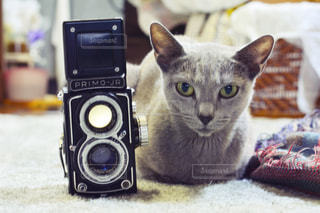 近くに猫のアップの写真・画像素材[1255825]