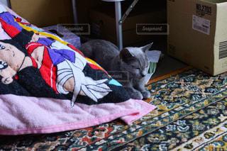 猫,家,ねこ,布団,のんびり,ロシアンブルー,ネコ