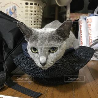 テーブルの上に座って猫の写真・画像素材[1280548]