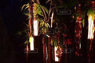 夜ライトアップされたクリスマス ツリーの写真・画像素材[1296283]