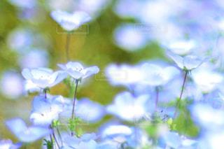 近くの花のアップの写真・画像素材[1357400]