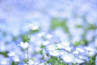 近くの花のアップの写真・画像素材[1357402]