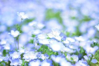 近くの花のアップの写真・画像素材[1357405]