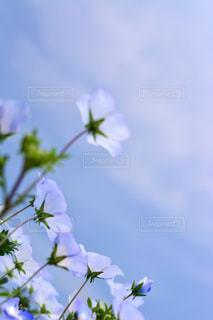 近くの花のアップの写真・画像素材[1357408]