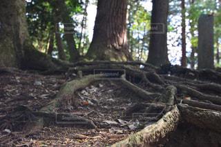森林の写真・画像素材[1420851]