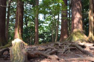 森林の写真・画像素材[1420852]
