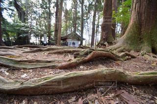 森林の写真・画像素材[1420855]