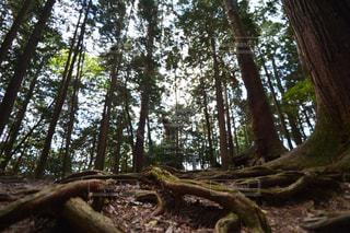 森林の写真・画像素材[1420857]