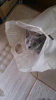 ボックスに座って猫の写真・画像素材[1446340]