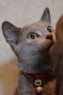 近くに猫のアップの写真・画像素材[1446341]