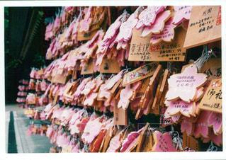 花,桜,ピンク,神社,薔薇,絵馬,お祈り,ピンク色,桃色,千葉県,pink,願い事,フィルム写真,pink色