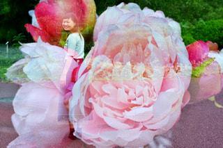 ピンクの花のグループの写真・画像素材[1458446]