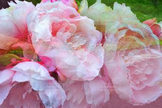 女性,自然,公園,花,ロングヘア,森林,屋外,ピンク,緑,花束,ボーダー,帽子,バラ,景色,鮮やか,女の子,草,ベレー帽,薔薇,樹木,スカート,布,人,顔,装飾,ポーズ,明るい,新鮮,妖精,植物園,ピンク色,桃色,pink,草木,pink色