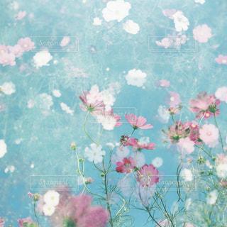 近くの花のアップの写真・画像素材[1466157]