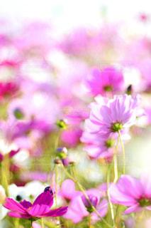 植物の紫色の花の写真・画像素材[1466391]