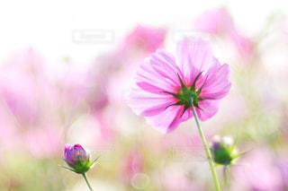 近くの花のアップの写真・画像素材[1466392]