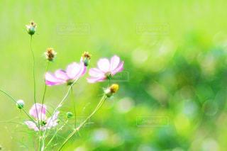 近くの花のアップの写真・画像素材[1466393]