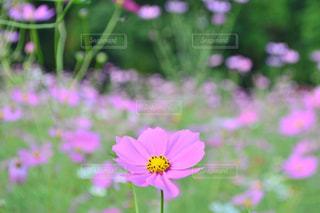 近くの花のアップの写真・画像素材[1466417]