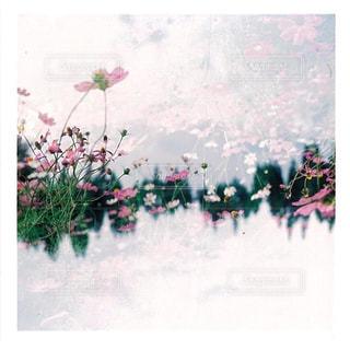 近くの花のアップの写真・画像素材[1466426]