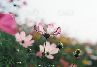 近くの花のアップの写真・画像素材[1466431]