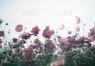 テーブルの上の花の花瓶の写真・画像素材[1466443]