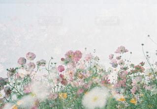 近くの花のアップの写真・画像素材[1466448]