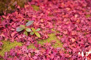 近くの花のアップの写真・画像素材[1646669]