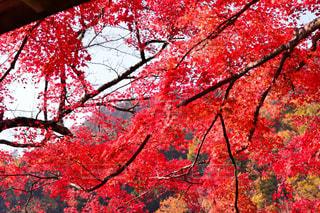 近くの木のアップの写真・画像素材[1646683]
