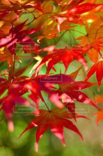 近くの木のアップの写真・画像素材[1646690]