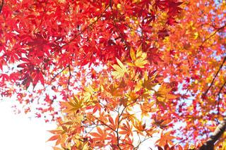 近くの木のアップの写真・画像素材[1646704]