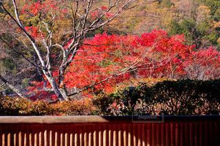 近くのツリー前の花壇の写真・画像素材[1646709]