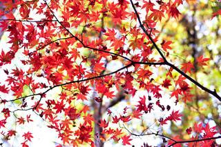 木の枝にピンク色の花のグループの写真・画像素材[1646710]