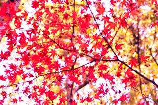 木の上に座ってピザの写真・画像素材[1646711]