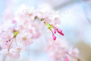 近くの花のアップの写真・画像素材[1801150]