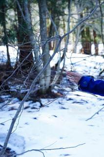 近くの雪を被りの森の写真・画像素材[1852865]