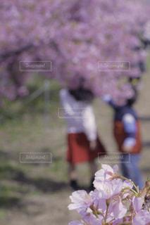 植物にピンクの花の写真・画像素材[1873055]