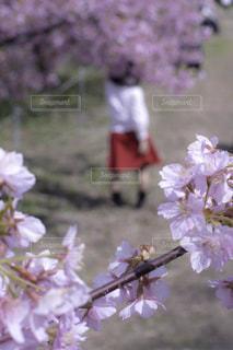 植物にピンクの花の写真・画像素材[1873056]