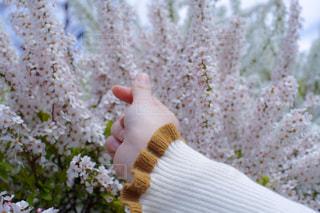 花を持っている手の写真・画像素材[1884392]