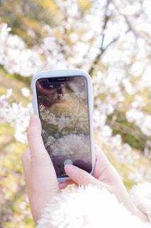 携帯電話を持つ手の写真・画像素材[2286054]