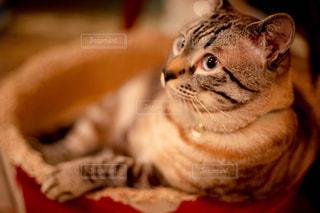 猫のクローズアップの写真・画像素材[2337709]